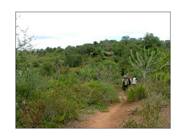 Les mines artisanales de grenats à Makanya